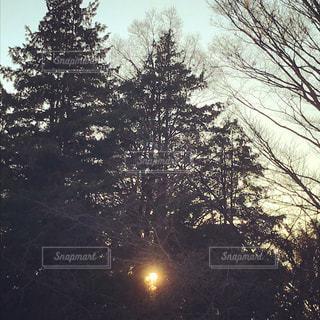 木の写真・画像素材[914822]