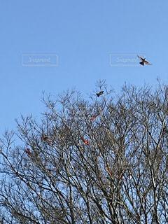 木の上を飛んでいる鳥の写真・画像素材[928400]