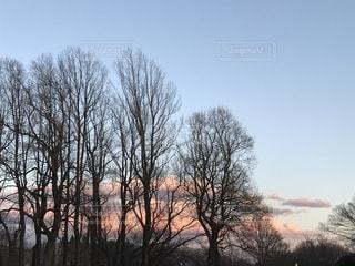 夕焼けと木の写真・画像素材[960268]