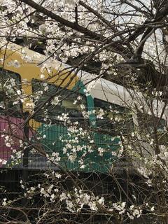 桜とあずさの写真・画像素材[1079787]