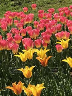 花いっぱいの写真・画像素材[1156367]