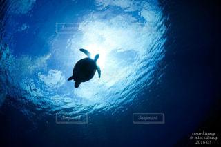 海の中の写真・画像素材[130662]