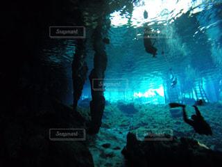海の中の写真・画像素材[130728]