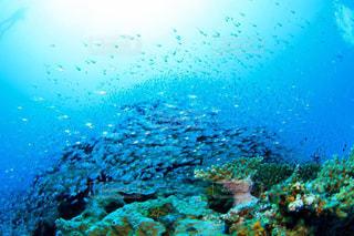 海の中の写真・画像素材[130812]