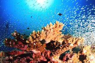 海の中の写真・画像素材[130815]