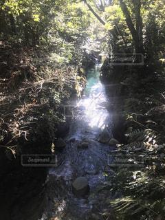 森を流れる川の写真・画像素材[1683175]