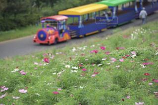芝生のフィールドでグッズ バスの写真・画像素材[851891]