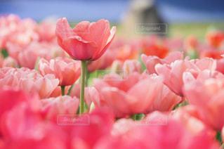 近くの花のアップの写真・画像素材[1661826]