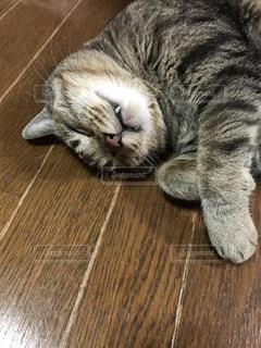 木製の表面の上に横たわる猫 - No.761262