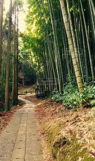 竹林の道 - No.763443