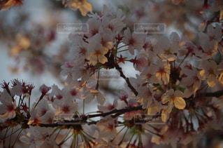 近くの花のアップの写真・画像素材[763381]