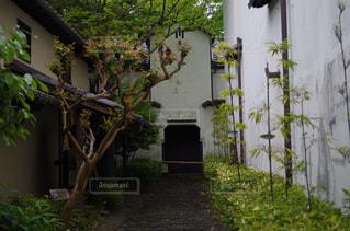 木の小さな家の写真・画像素材[763419]