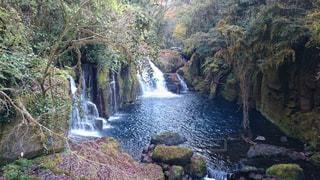 木々 に囲まれた滝の写真・画像素材[763076]