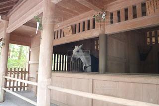 伊勢神宮の白馬の写真・画像素材[2870570]