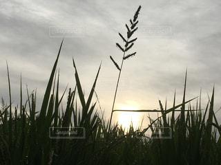 朝日のなかにの写真・画像素材[762527]
