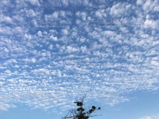 秋の空とうろこ雲の写真・画像素材[767224]