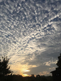 うろこ雲の朝の写真・画像素材[767225]