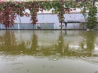 雨のしずく - No.772716
