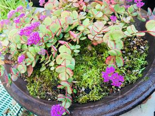 鉢植えの花の写真・画像素材[802711]