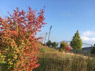 道の駅の紅葉の写真・画像素材[802714]