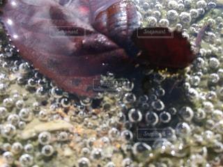 小さな川中の不思議な泡の写真・画像素材[852328]
