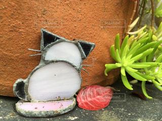 鉢に猫の写真・画像素材[858547]