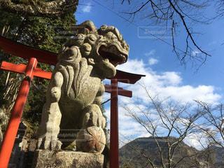 狛犬と朱の鳥居の写真・画像素材[930138]