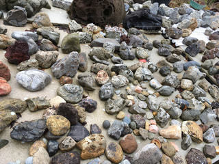 岩の日向ぼっこの写真・画像素材[1077471]