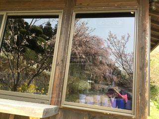 東屋に写るしだれ桜をスナップの写真・画像素材[1092849]