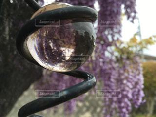 藤の花とクリスタル 逆さまにの世界も楽しいですねの写真・画像素材[1146394]