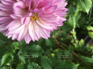 近くの花のアップの写真・画像素材[1406959]
