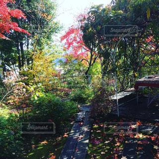 庭のパーゴラの写真・画像素材[1605731]