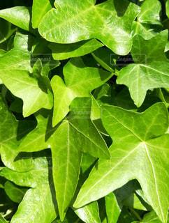 近くの緑の植物を - No.766197
