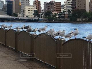 隅田川と鳥たちの写真・画像素材[818917]