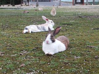 茶色と白羊草に横たわっての写真・画像素材[763679]