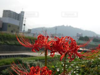緑の葉と赤い花 - No.763810