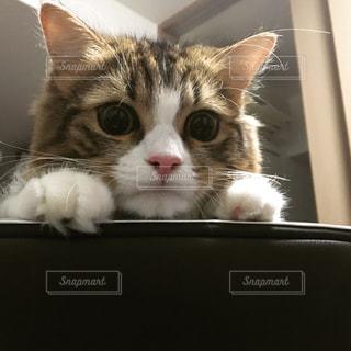 覗き込む猫の写真・画像素材[764051]
