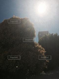 屋外の写真・画像素材[22519]