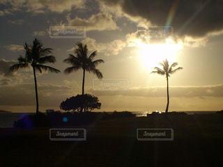 背景の夕日とヤシの木のグループの写真・画像素材[791325]