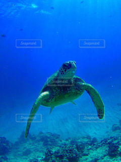 ウミガメの写真・画像素材[765253]