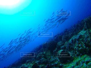 ダイビングの写真・画像素材[765284]