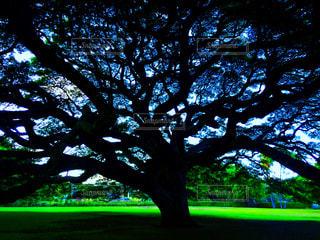 この木なんの木の写真・画像素材[826208]