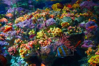 カラフルな海の中の写真・画像素材[1176512]