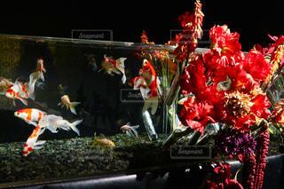 金魚の写真・画像素材[1378614]