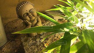 近くの緑の植物をの写真・画像素材[764515]