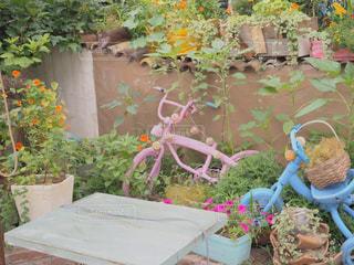 お庭の写真・画像素材[796050]