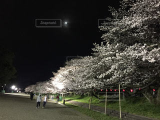 夜桜 - No.764370