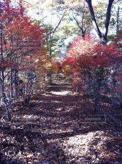 紅葉への道の写真・画像素材[764633]