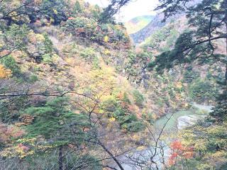 背景の山と木の写真・画像素材[766442]