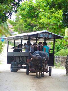 竹富島の水牛車の写真・画像素材[785577]